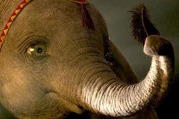 "Regardez le making of du film ""Dumbo"""