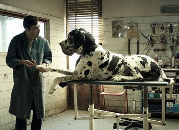 """Le coin des cinéphiles : """"Dogman"""""""