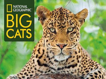 Februari is BIG CAT maand op National Geograhic!
