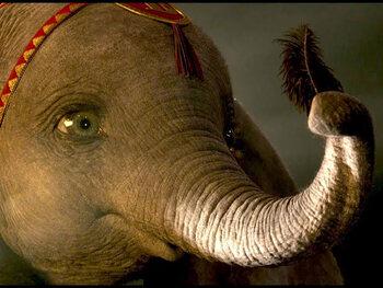 Dumbo, le film de Tim Burton, est maintenant disponible dans le catalogue à la demande de Proximus Pickx