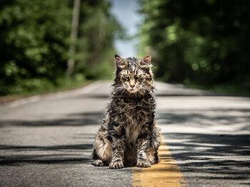 Bekijk 'Pet Sematary' nu in de op aanvraag-catalogus van Proximus Pickx