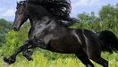 Tramp - Black Beauty