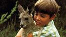 Le kangourou Skippy