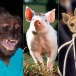 Que sont devenus ces animaux stars de l'écran ?