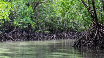 The Secret Life Of Mangroves