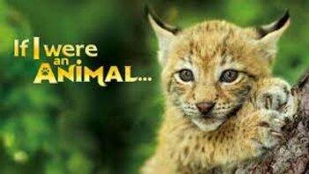 If I were an Animal…