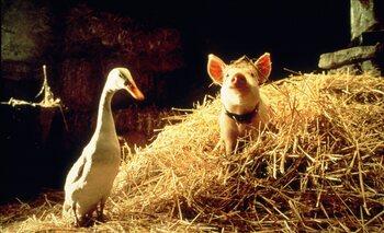 Babe, le cochon devenu berger (1995)