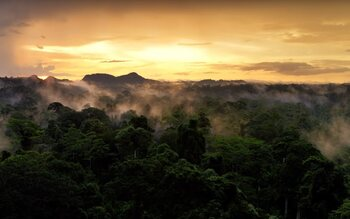 Zondag: David Attenborough: A Life on Our Planet