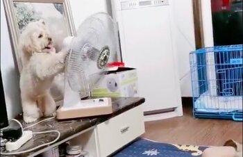 Hondje heeft het even te warm