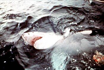 Hollywood en zijn haaienobsessie