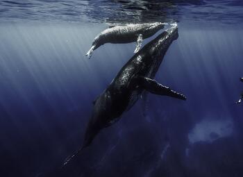 Ushuaïa TV vous plonge dans l'univers fabuleux des océans