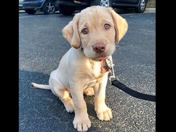 puppyofday – 353 000 abonnés