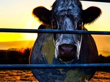 Cowspiracy : vous ne regarderez plus votre steak de la même manière