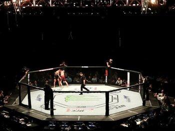 10 cadors de l'Ultimate Fighting Championship