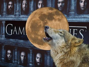 Wat je moet weten over de wolven in Game of Thrones