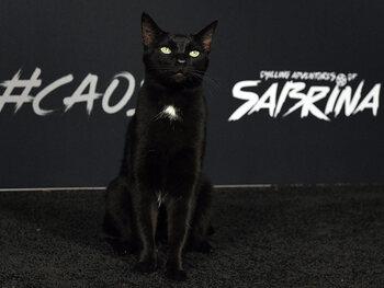Salem(s)