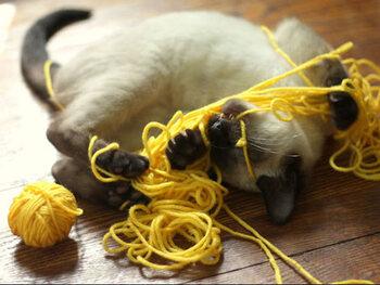 La pelote de laine