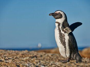 'Penguin Town', de prachtige documentaire over schattige Zuid-Afrikaanse pinguïns, nu te zien op Netflix