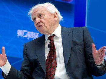 David Attenborough wil een clubplaat maken
